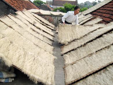 Làng nghề làm miến dong ở xã  Tứ Dân huyện Khoái Châu