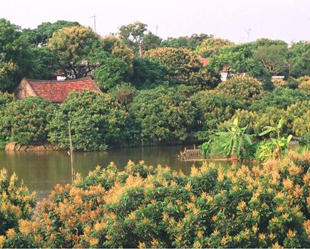 http://hungyentourism.com.vn/hung-yen-mua-hoa-nhan