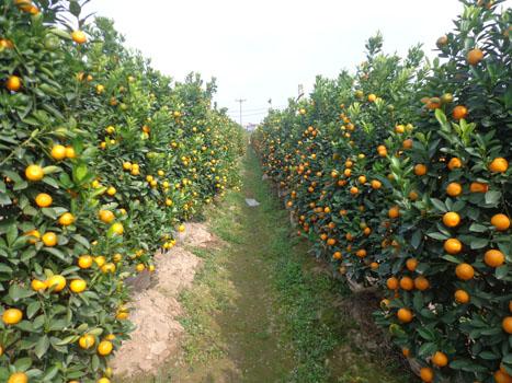 Văn Giang – mảnh đất ươm mầm xuân