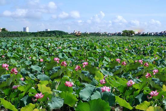 http://hungyentourism.com.vn/mot-vung-sen-quy
